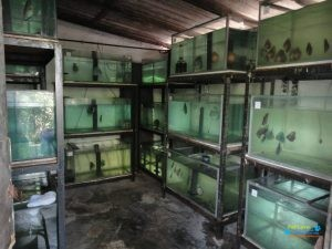 Aqua-Topic Discus Farm2.jpg