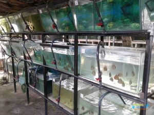 Aqua-Topic Discus Farm3.jpg
