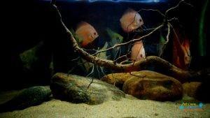 Bhasuru Aquarium - Homagama2.jpg
