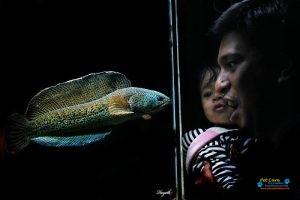Bhasuru Aquarium - Homagama3.jpg