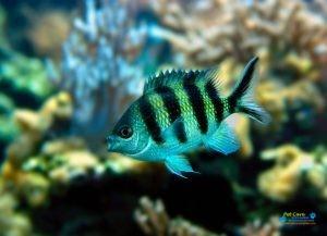 Bhasuru Aquarium - Homagama4.jpg