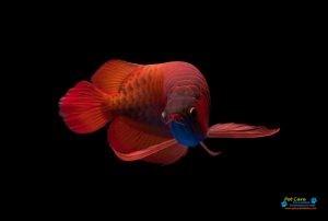 Bhasuru Aquarium - Homagama5.jpg