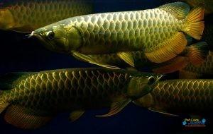 Bhasuru Aquarium - Homagama7.jpg