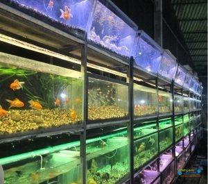 Blue Aqua Pets6.jpg