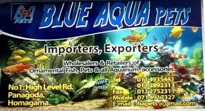 Blue Aqua Pets7.jpg