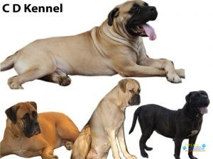 CD Kennels3.jpg