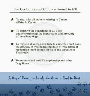 Ceylon Kennel Club2.jpg