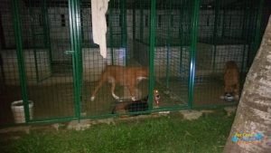 Companion Canines4.jpg
