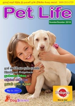 DogScience4.jpg