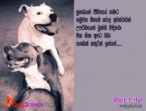 DogScience5.jpg