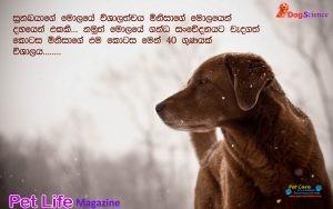 DogScience8.jpg