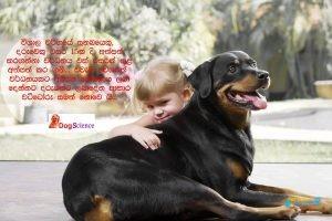 DogScience9.jpg
