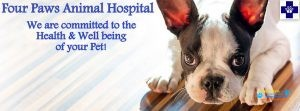 FOUR PAWS Animal Hospital2.jpg