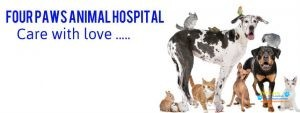 FOUR PAWS Animal Hospital4.jpg