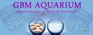 GBM Aquarium2.jpg
