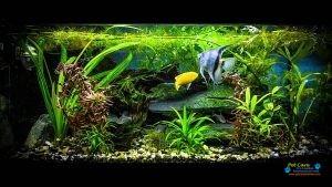 GBM Aquarium3.jpg