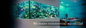 GBM Aquarium5.jpg