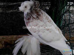 Global Pets5.jpg