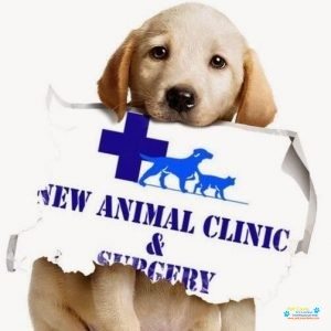 New Animal clinic and Surgery Veterinary Hospital.jpg