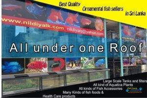 Nildiya Aquarium .jpg