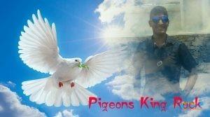 Pigeons King Rock2.jpg