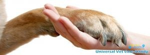 Universal Vet Care Animal Clinic & Surgery2.jpg