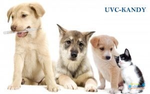 Universal Vet Care Animal Clinic & Surgery3.jpg