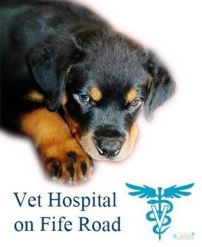 Vet Hospital on Fife Road 2.jpg