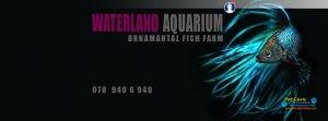 Waterland Aquarium4.jpg