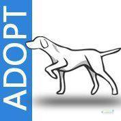 adoptadog.jpg
