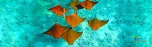 aquamarines5.jpg