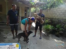 dogcare6.jpeg