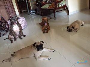 dogtime3.jpg
