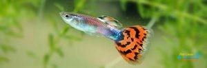 lumbini_aquaria_wayamba_ltd2.jpg